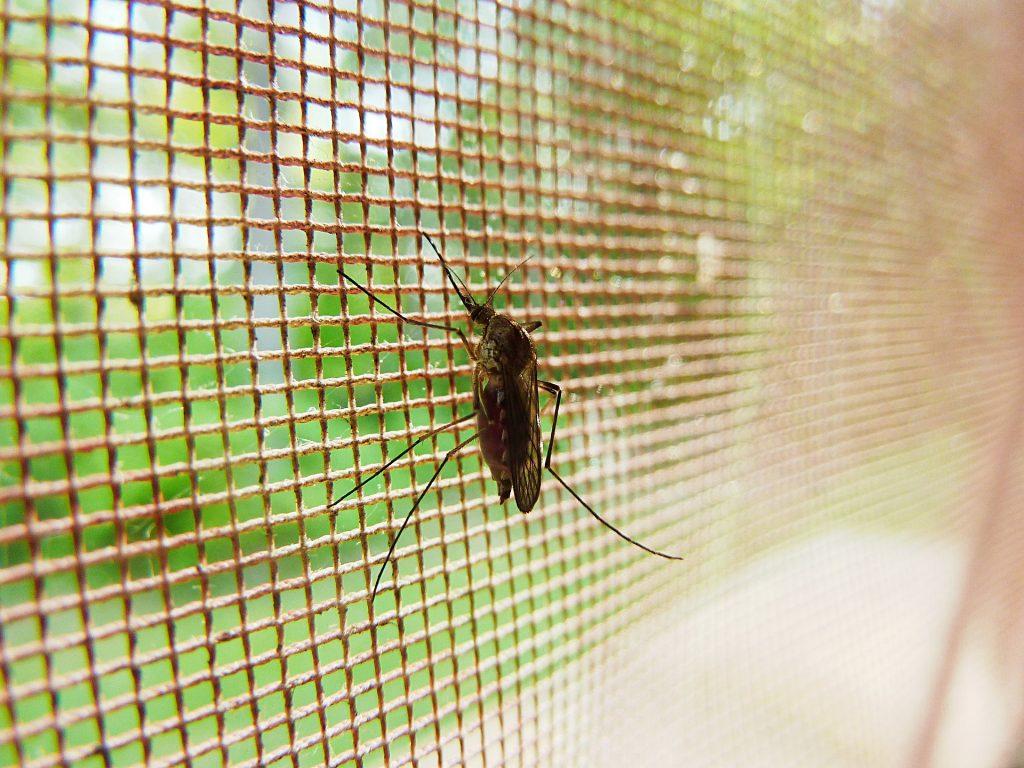 Entre incertidumbres y éxitos: la lucha contra la malaria en los últimos 100 años