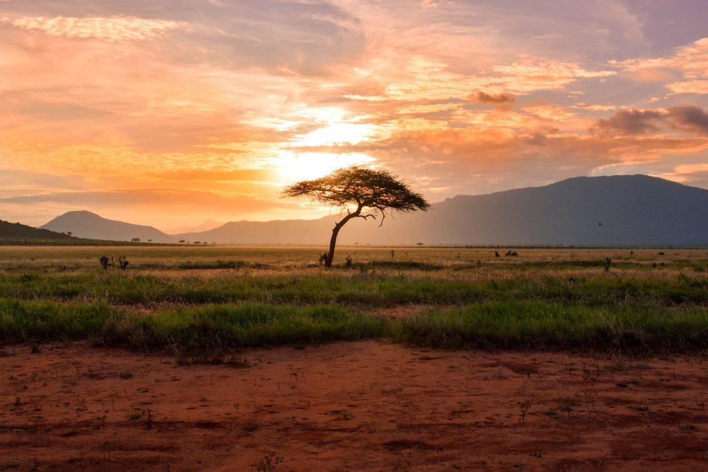 Los 10 Parques Nacionales más Sostenibles de África