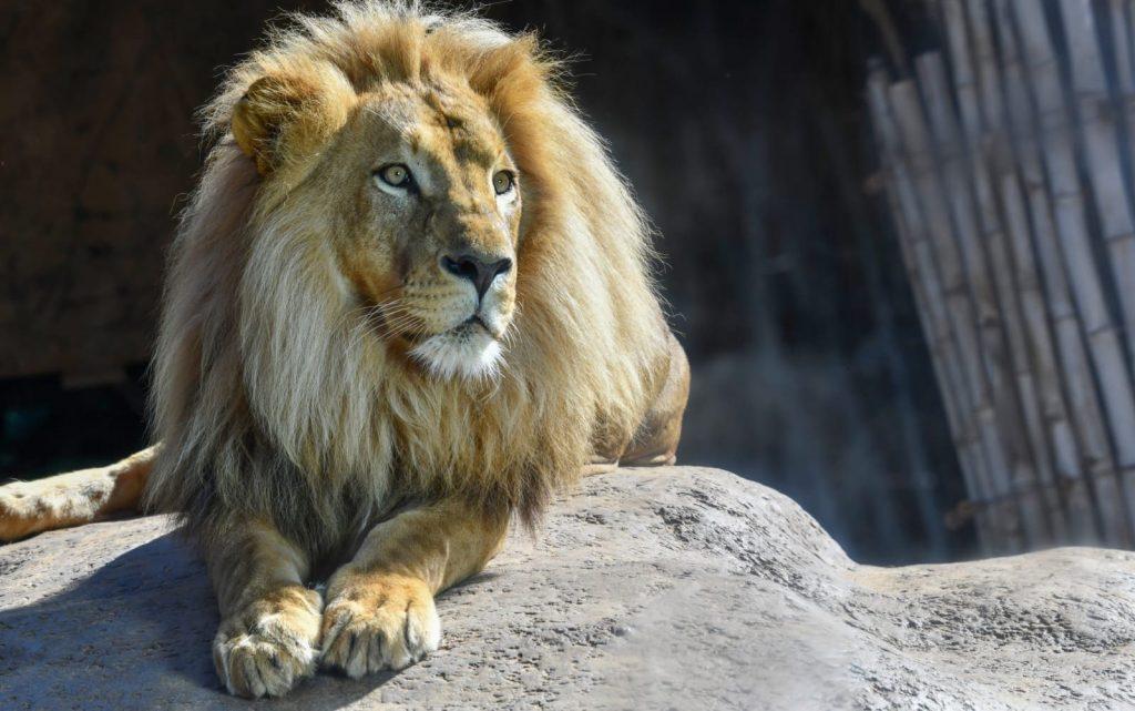 El complejo y estricto proceso de traer animales africanos a España